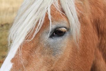 Cavallo - Horse