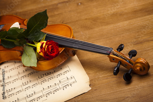 Violin and rose - 46416737