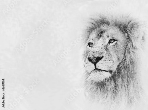 Lion Face on Card Banner
