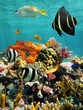 Coral reef and tropical fish with water surface