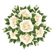 Bouquet of white roses. Vector illustration.