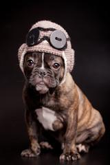 French bulldog puppy, in knit pilot helmet