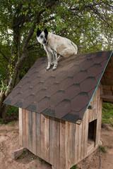 Dog sitting on te roof