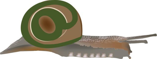chiocciolina lumaca