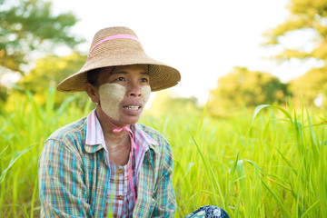 Mature Myanmar farmer