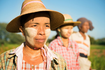 Myanmar farmer standing in row