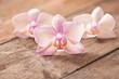Orchidee auf Holz