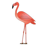 WEB ART DESIGN PINK FLAMINGO FLAMAND  ROSE WADING BIRD 020