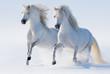 Fototapeten,winter,waliser,2,pferd