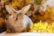 Kaninchen in Blüten