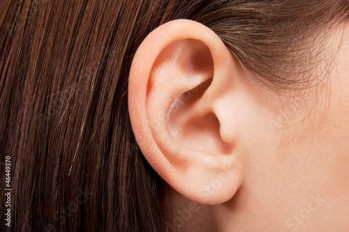 Leinwanddruck Bild ear