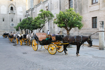 Forse-drawn carriage