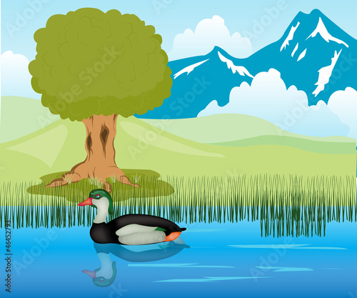 Tuinposter Rivier, meer Duck sails in pond