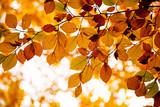 Fototapety Herbstlicher Hintergrund