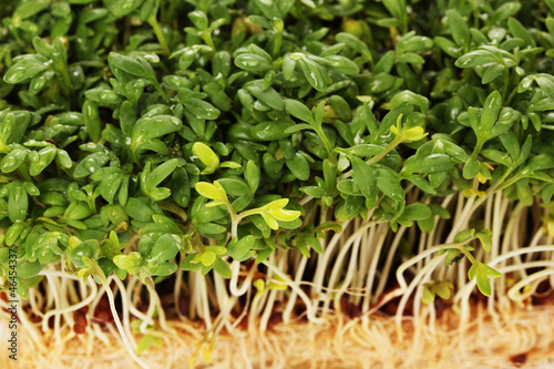 Fresh cress salad closeup