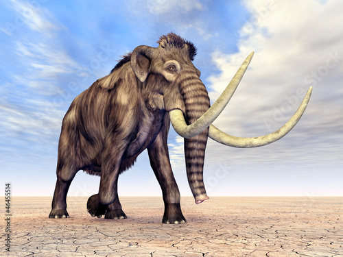 canvas print picture Mammut