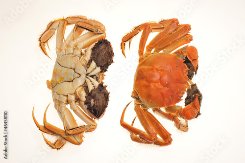 Steamed Cooked Hairy Crabs