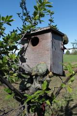 casa uccelli