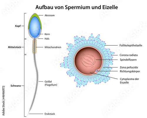 Single frau insemination
