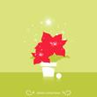 Christmas star poinsettia flower