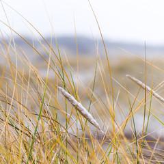 Nordseedünen im Winter, Insel Juist, Wintersaison
