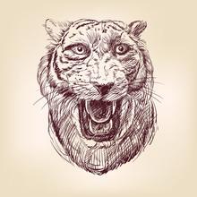 Tiré Tiger main