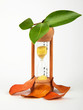 Hourglass with green and dry leaves