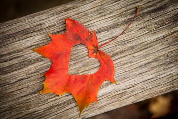 Autumn leaf heart