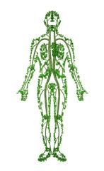Human - tree 2