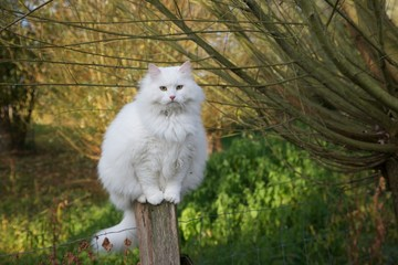 a white cat on a wooden fence