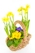 Korb mit Blumen, basket with flowers