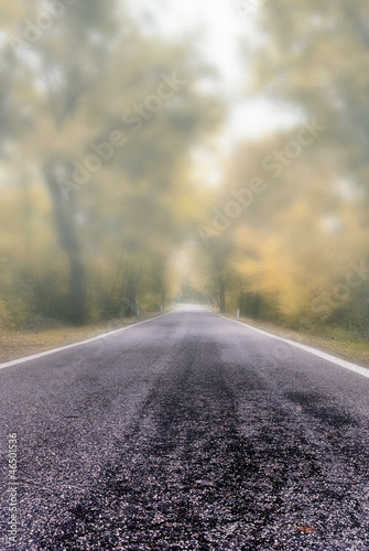 road shrouded by the fog in autumn