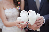 Fototapety Two white doves.Wedding