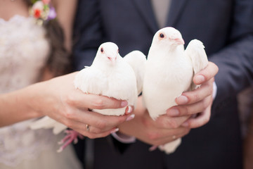 Two white doves.Wedding