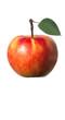Elstar, Apfel, Malus domestica