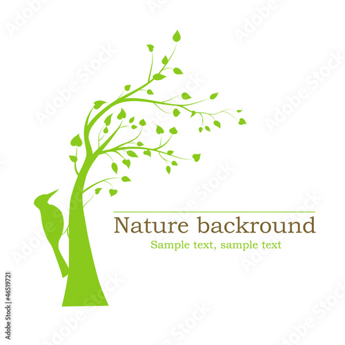 woodpecker on a tree - vector background