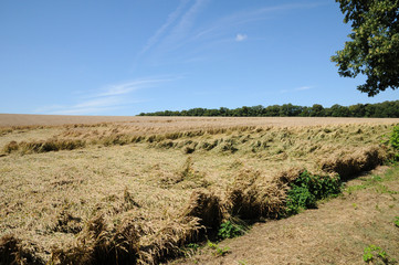 France, wheat field devastated by storm in Vigny