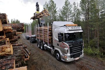 Holzernte Holzabbau