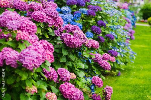 Spoed canvasdoek 2cm dik Hydrangea garden