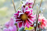 Blumen 255
