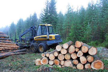 Forwarder at Logging Site