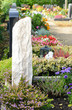Friedhof 35