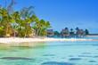 seacoast with palm trees