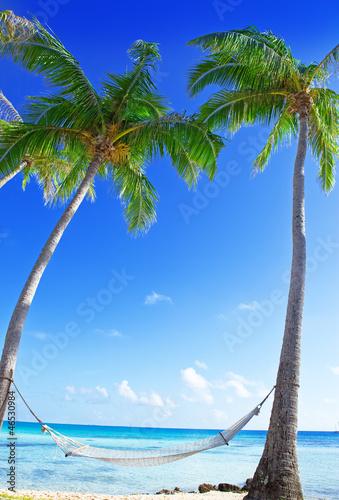 Fototapeten,meer,ozean,palme,hängemast