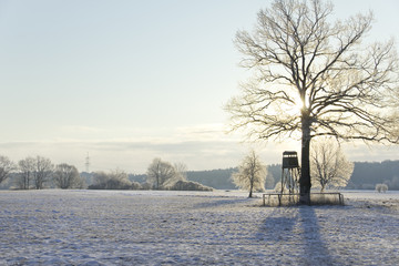 winter landscape with raised blind and tress on the wide field