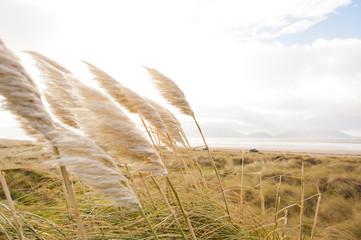 Dühne Strand Sonne