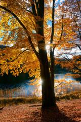 Herbst in der Uckermark, Land Brandenburg, Deutschland