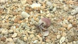 Hermit Crab on leaving