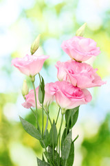 bouquet of eustoma flowers, on green background