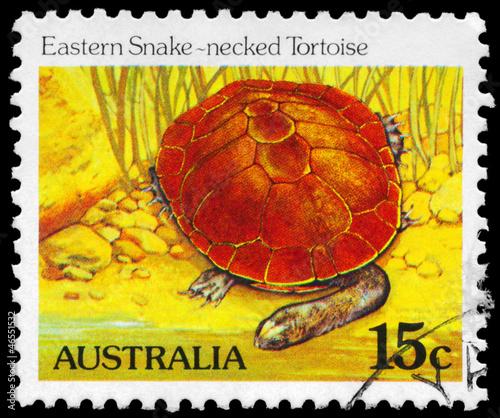 Leinwanddruck Bild AUSTRALIA - CIRCA 1981 Eastern Snakenecked Tortoise